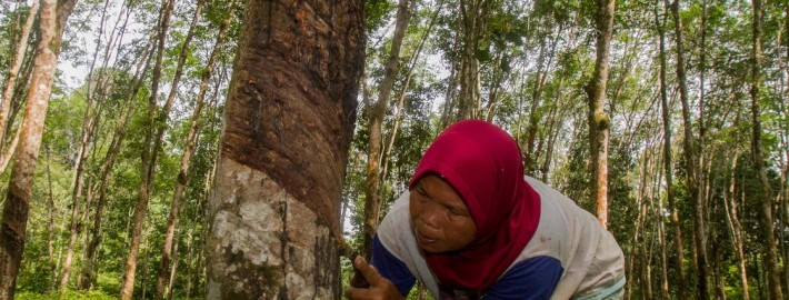 Tri Saputro/Center for International Forestry Research